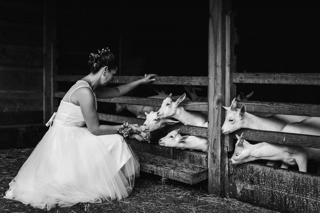 Fotoreportage tijdens de trouwdag op de kinderboerderij, bruid geeft de geitjes een fles