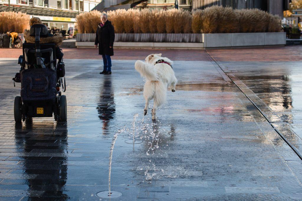Hulphond Mikey speelt in de stad onder de waterfontein
