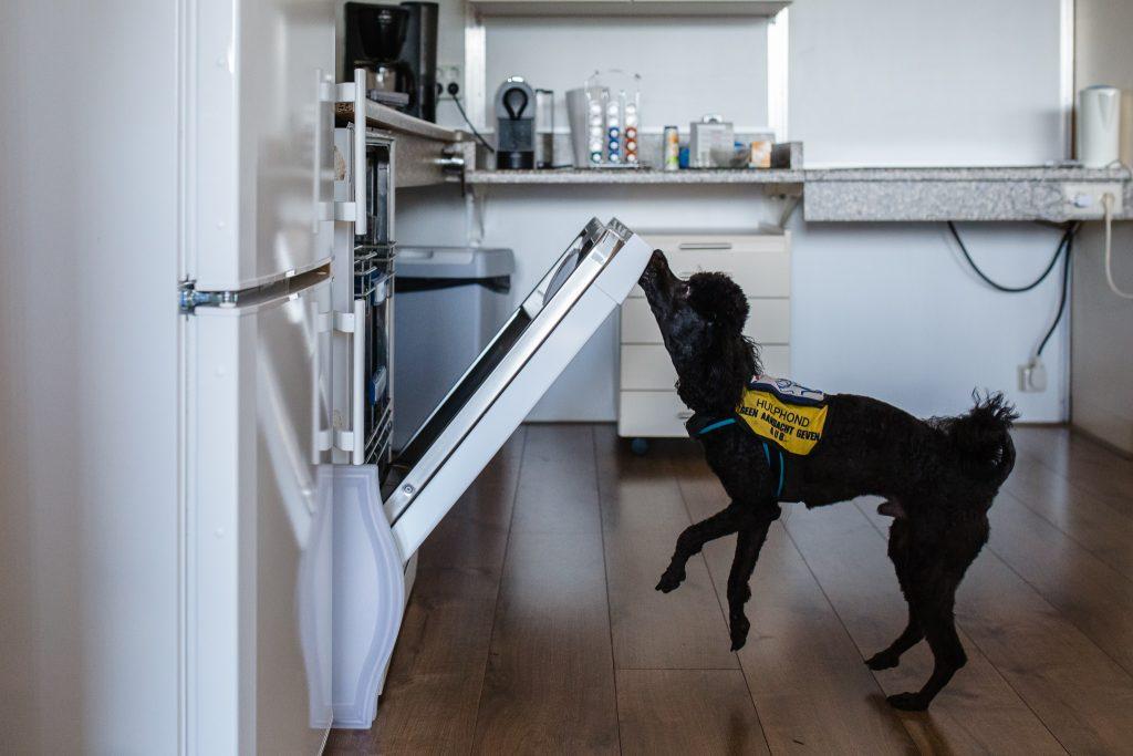 hulphond doet de vaatwasser dicht, fotoproject over hulphonden in Nederland