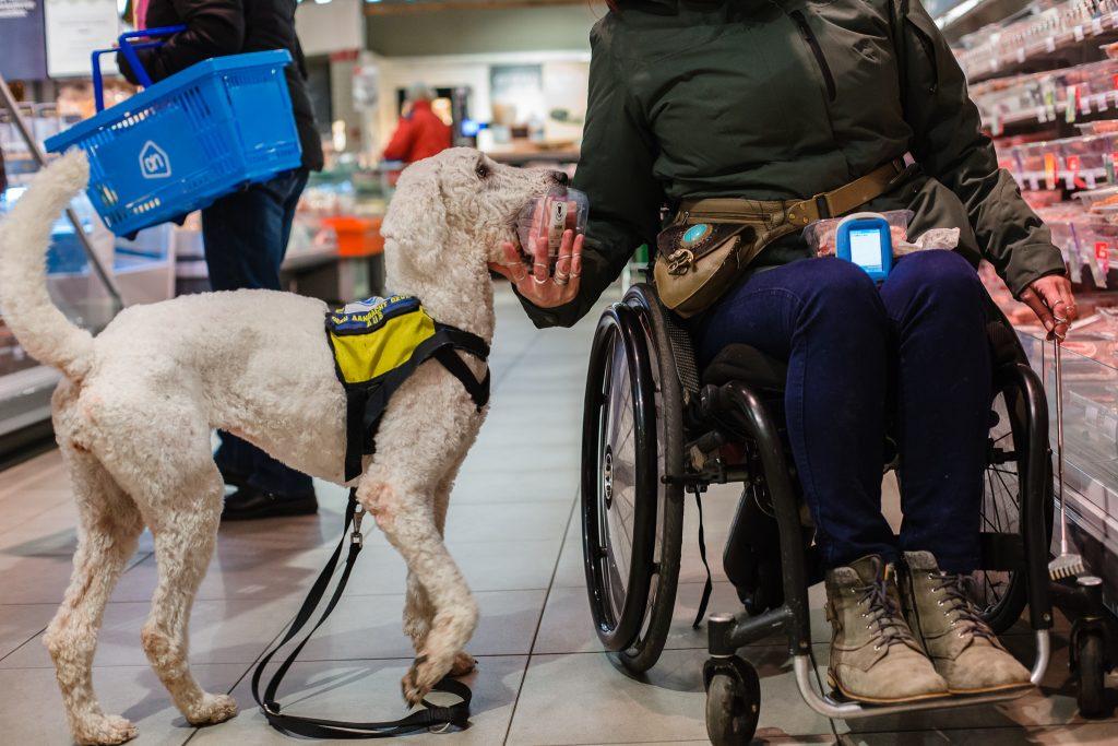 Hulphond Lady helpt met de boodschappen in een supermarkt van Albert Heijn, fotoproject over hulphonden in Nederland door Maljaars Fotografie