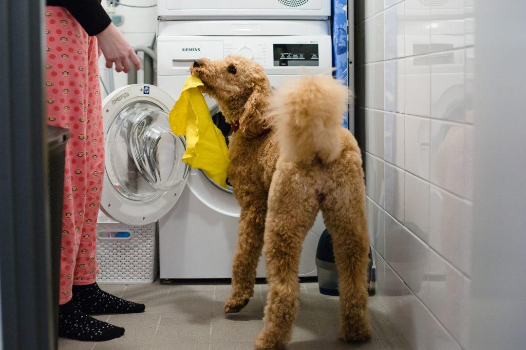 adl hulphond haalt was uit de wasmachine
